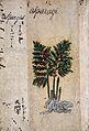 Japanese Herbal, 17th century Wellcome L0030048.jpg