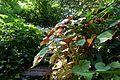 Jardin Alpin @ Jardin des Plantes @ Paris (27933450300).jpg