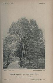 Charles huber wikimonde for Le jardin d alphonse