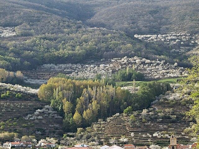 valle del jerte en caceres: