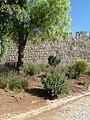 Jerusalem Wall P1140534.JPG