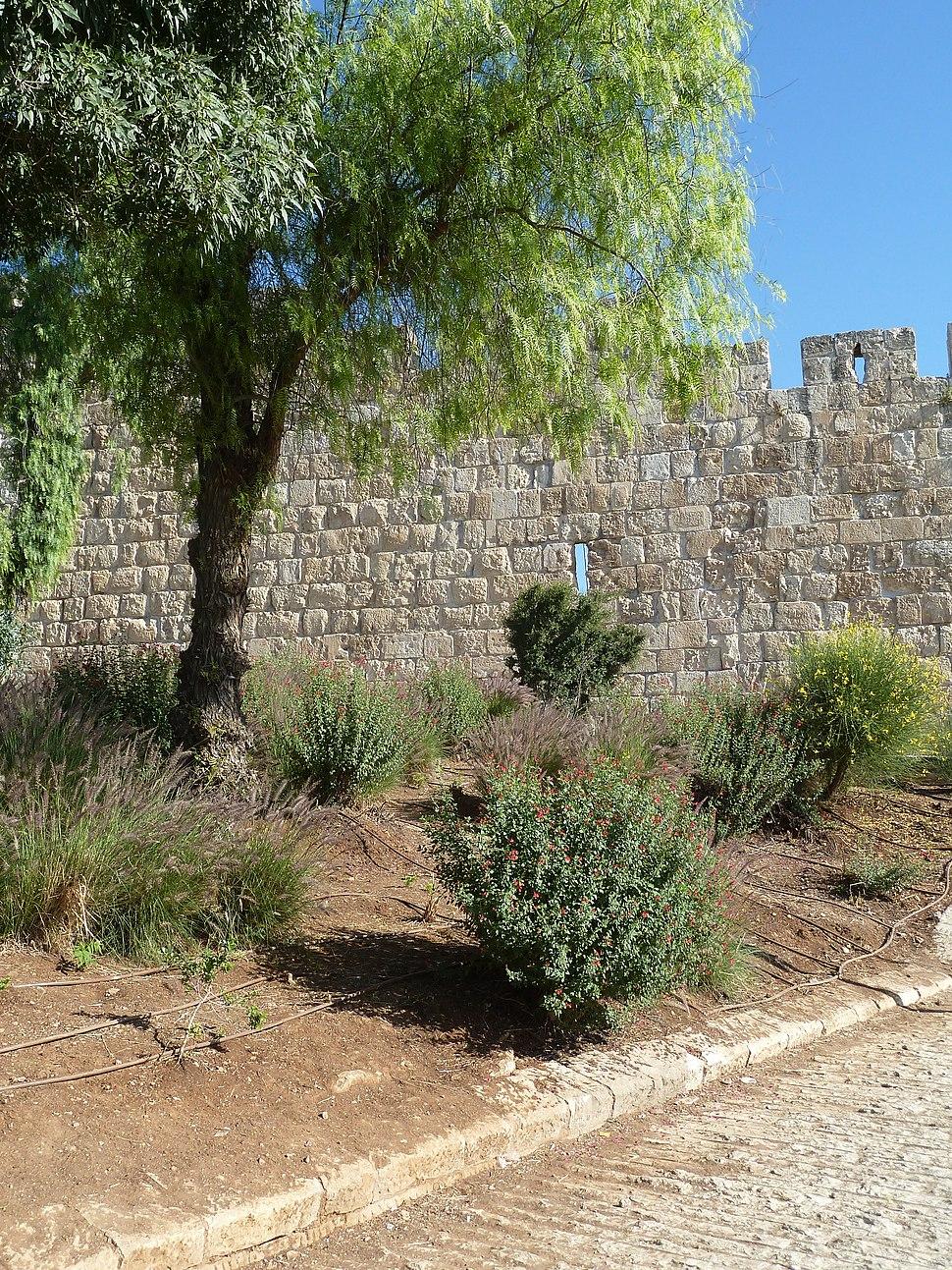 Jerusalem Wall P1140534