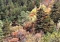 Jiuzaigou Multicolor Forest 九寨溝彩林 - panoramio.jpg