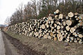 Křivoklátsko - Těžba dřeva V..JPG