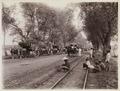 KITLV - 30209 - Kurkdjian, N.V. Photografisch Atelier - Soerabaja - Sugar plantation in East Java - 1921.tif