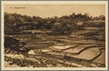 KITLV - 33442 - Kurkdjian, N.V. Photografisch Atelier - Soerabaja - Paddy field in East Java - circa 1920.tif