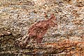 Kakadu (AU), Kakadu National Park, Anbangbang Rock Shelter -- 2019 -- 4136.jpg