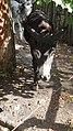Kaliningrad Zoo - Donkey.jpg