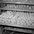 Kalkoenfokkerij in Beit Herut Broedmachine met kalkoeneireren die aan het uitko, Bestanddeelnr 255-4609.jpg