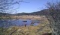 Kamagaike, Yashimagahara Wetland -October 2011 a.jpg