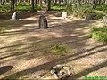 Kamienne kręgi niedaleko Piły - panoramio.jpg
