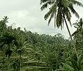 Kedisan, Tegallalang, Gianyar, Bali, Indonesia - panoramio (2).jpg