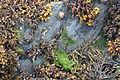 Kilclief Beach, August 2011 (02).JPG