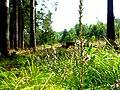 Kirschweiler, Nähe Naturschutzgebiet Silberich – Kirschweiler Festung - panoramio (1).jpg