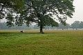 Kolkata Maidan, green recreational space with trees, Kolkata, India.jpg