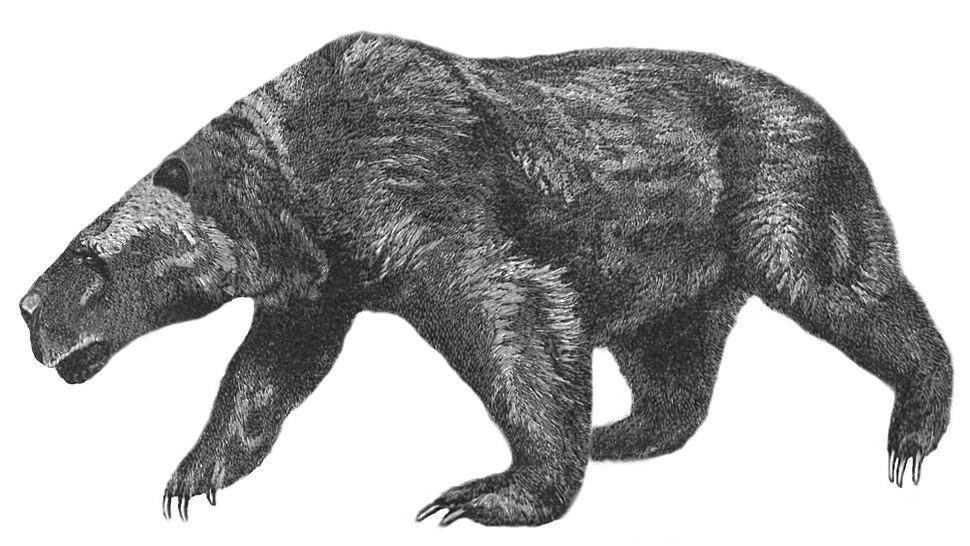 Kolponomos newportensis