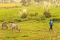 Koshi Tappu Wildlife Reserve-1199.jpg