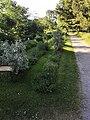 Koulupuisto, luonnonkasveja.jpg