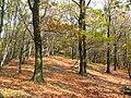 Kukla hreben jesen 01.jpg