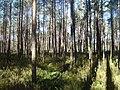 Līksna Parish, LV-5456, Latvia - panoramio - BirdsEyeLV (2).jpg