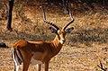 Lake Mburo national park Uganda (3804959806).jpg