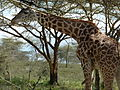Lake Naivasha animals 16.JPG