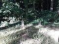 Lamb's Creek Episcopal Church and associated graves - 8.jpg