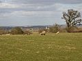 Lambs on Daisy Hill Farm - geograph.org.uk - 1738710.jpg