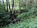 Landschaftsschutzgebiet Wäldchen bei Buer Melle Datei 17.jpg
