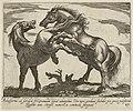 Landschap met twee paarden, beiden naar links gewend. Eén paard bokt en het andere paard steigert. NL-HlmNHA 1477 53011515.JPG
