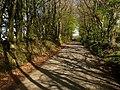 Lane to Pepperdon Down - geograph.org.uk - 1290921.jpg