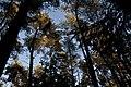 Langquaid, outubro de 2011 - panoramio (3).jpg