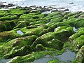 Laomei Green Stone Grooves 老梅綠石槽 - panoramio.jpg