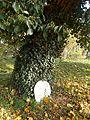 Lapidarium Kobylanka 6.jpg