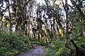 Lascar Montane rainforests biome (4466414438).jpg