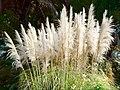 Le Jardin botanique de Palerme (6896301012).jpg
