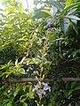 Leaves and trees palavangudi jpg 25.jpg