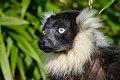 Lemur (26619211887).jpg