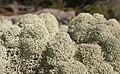 Lichens in Finland 2.jpg
