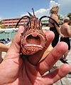 Lionfish, Belize (4861694655).jpg