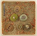 Lithops Collection - Top view - Feb. 2011 - (4).jpg