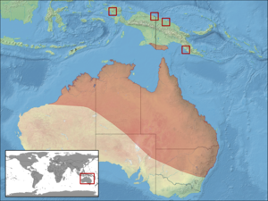 Litoria caerulea distribution.png