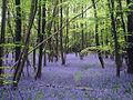 Little Chittenden Wood - geograph.org.uk - 1861070.jpg