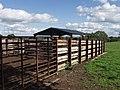 Livestock handling facility near Street Dinas - geograph.org.uk - 248562.jpg