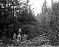 Loggers in the woods, Coats-Fordney Lumber Company, near Aberdeen, ca 1920 (KINSEY 1890).jpeg