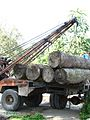 Logging Forest Loss IMG 3939 25.jpg