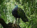 London Zoo 00863.jpg