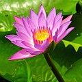 Lotus-Delhi.jpg