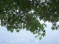 Lovere - panoramio - Emanuela Meme Giudic… (2).jpg