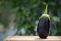 Lufa Farms Eggplant.jpg